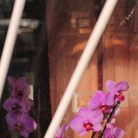 Она была не первой  Орхидеей, которую я встретил.... :: Юрий Гайворонский