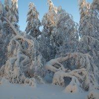 Зимняя шуба :: vladimir Bormotov