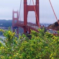 Golden Gate :: Lika Shakhmatova