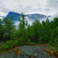 Сырость и туман :: Светлана Игнатьева