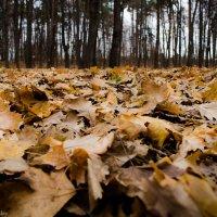 Живая листва :: Дмитрий Крыжановский