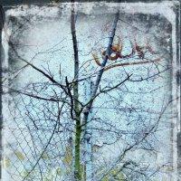 ... деревце :: Natali
