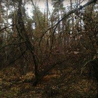Осень лесные скульптуры творит... :: Ольга Кривых