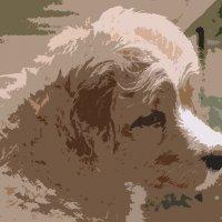 Пёс :: Игорь Шубовичь