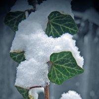 редкий краснодарский снег :: Валерия Скиба