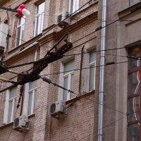 Прогулка по Москве :: Елена Гаврилова lega