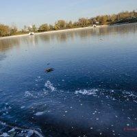 Первый лёд :: Константин Сафронов
