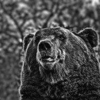 Зоопарк :: Владимир Самсонов