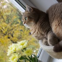 Вглядываясь в осень.. :: Анна Щеголенко