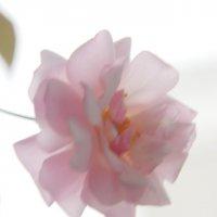 розы :: Алексей Короткевич
