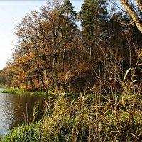 Осенний пейзаж. :: Валерия Комова