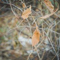 Листья опали :: Света Кондрашова