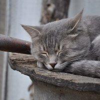 славный котик фимка :: Виктория Кечина
