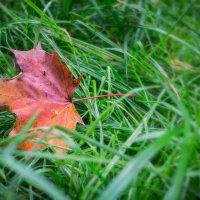 Первые шаги осень :: Lidiya Oleandra