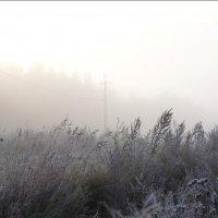 Утро туманное :: Людмила Якимова