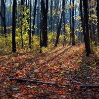 В лесу. :: *MIRA* **
