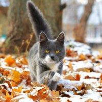 Зимняя осень:) :: Екатерина Лещенко