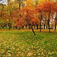 Октябрь :: Анатолий Цыганок