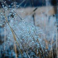 Осень :: Sergey Gorelov