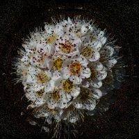 По фото Viacheslav Ночные цветы :: Владимир Хатмулин