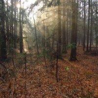 Ноябрь-красавец IMG_4313 :: Андрей Лукьянов