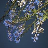 синие цветы на небе :: Марике Марике