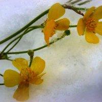 Озябшие на снегу...... :: Павлова Татьяна Павлова