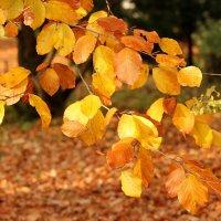 Осенняя ветка :: Татьяна Беляева