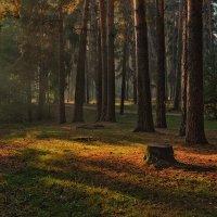 Осеннее утро :: Катя Курсеева