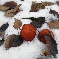 Ноябрьские яблоки. :: Елена