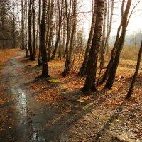Ноябрь - это почти апрель! - DSC09244 :: Андрей Лукьянов