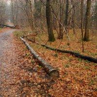 Ноябрь - это все же ноябрь, а не апрель! - DSC09277 :: Андрей Лукьянов
