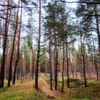 В лесу погром ! :: Мила Бовкун