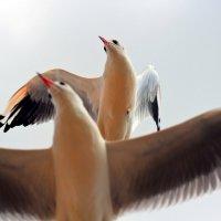 Крмские чайки :: Ардалион Иволгин