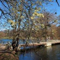 весна напроге :: Валентина Папилова