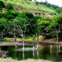 Одинокие деревья :: Анечка Вакуленко