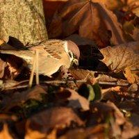 в осенней листве :: linnud