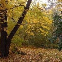 Осень - 1 :: Юрий Владимирович 34