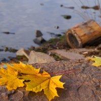 ...листья  жёлтые нам под ноги ложатся.... :: Ольга Cоломатина