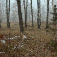 в тумане... :: юрий иванов