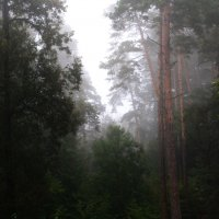 Туман...... утро... :: Валерия  Полещикова