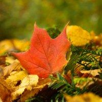 тёплые краски осени :: юрий варьят
