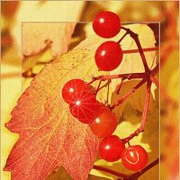 Осеннее отражение солнца :: Лидия (naum.lidiya)