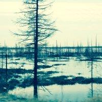озера :: Раиса Торопова