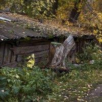 Жёлтая осень в старом дворе... Серия. :: Лилия *