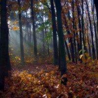 в осеннем лесу :: юрий иванов