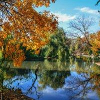 Парк в Краснодаре :: Константин Лабудя