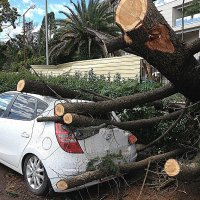 После урагана :: Tata Wolf