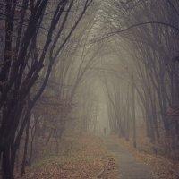 туман :: Олег Лопухов