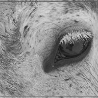 Eye :: muh5257